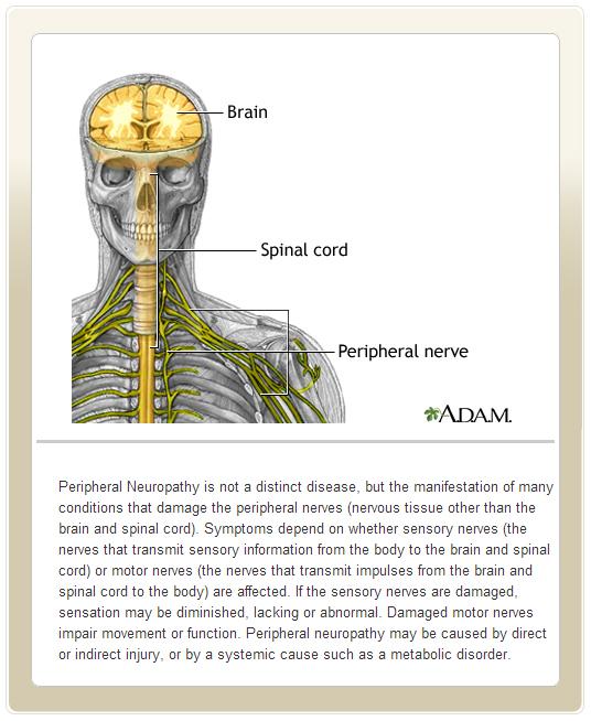 Image: Nervous System