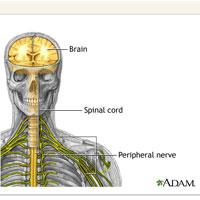 Peripheral Neuropathy Anatomy: New Life Outlook  Infographic