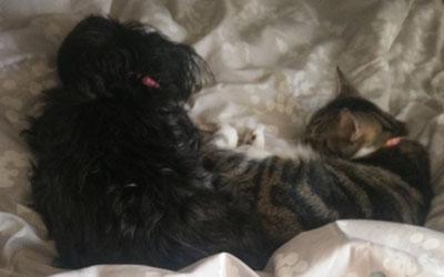 Courtney's Pets